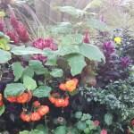 ハロウィンの植栽に使われるパンプキンツリー