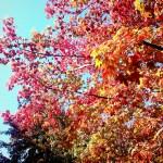 三色彩道の紅葉