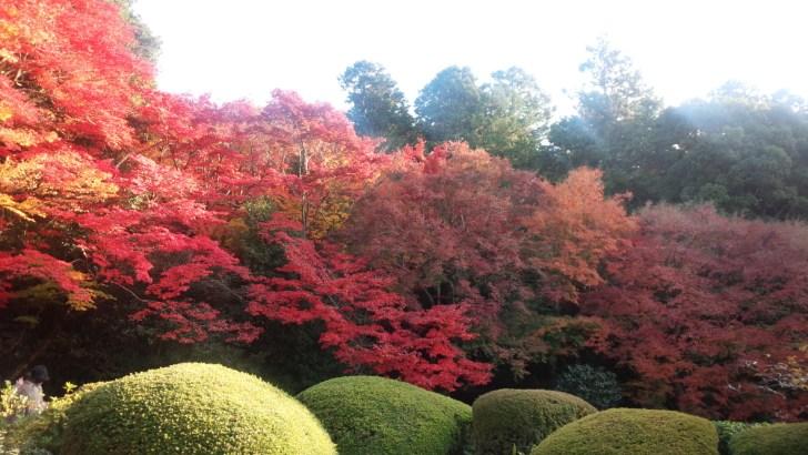 京都 詩仙堂の庭園
