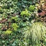 緑の壁@新宿