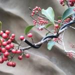 美しいクロガネモチの赤い実