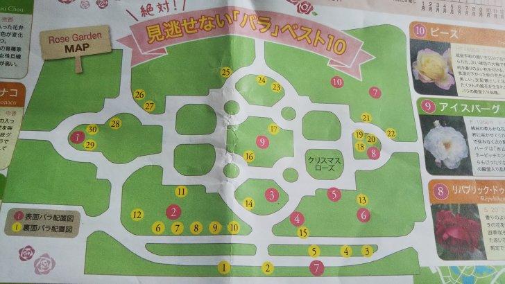 京都府立植物園のばら園マップ 見逃せないバラベスト10