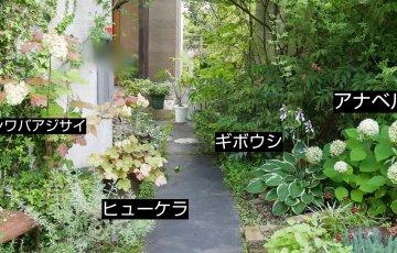 安定の庭のまま7月に突入。