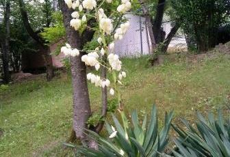 小学校の脇の斜面に佇む白い花。君の名は?