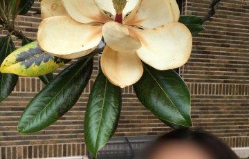 娘の頭上に大きな花。君の名は?