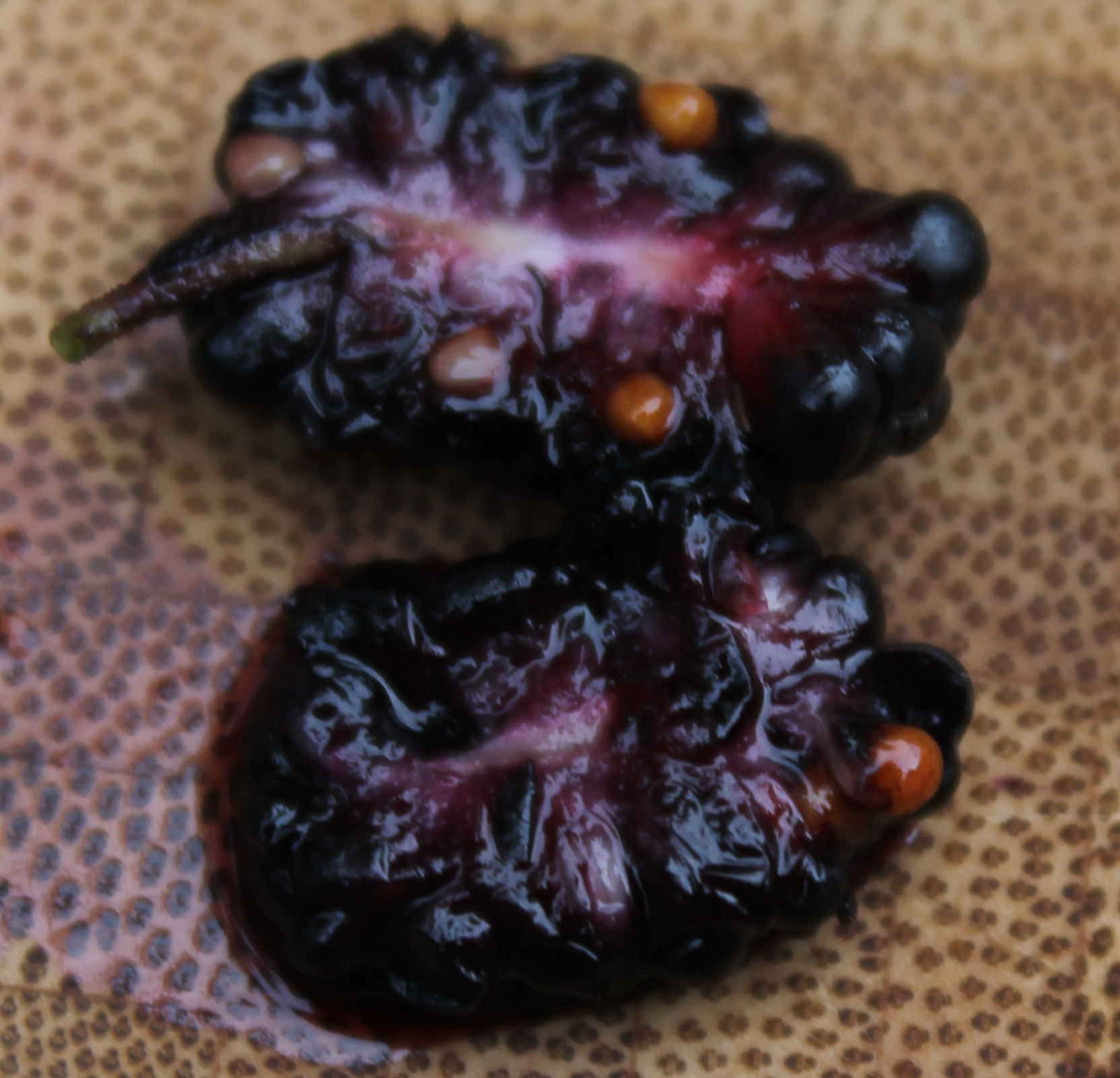 Figs and Mulberries inside and out  The Botanist in the