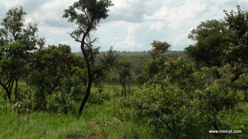 Campo Cerrado vegetation, Brazil