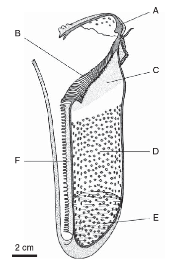Diagram for a Pitcher Plant