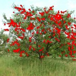 Characterization of 3-D patterns of disease in cherry