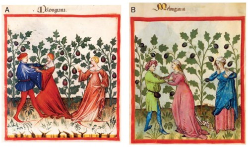 Aubergines inciting lust in medieval times.