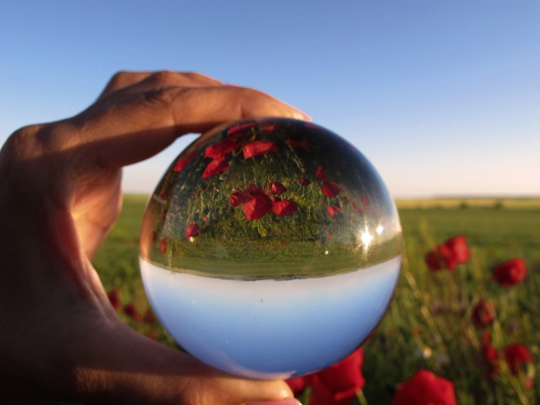 Poppies through a crystal ball