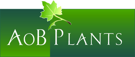 AoB PLANTS small banner