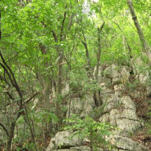 Nutrient stoichiometry and resorption in karst vegetation