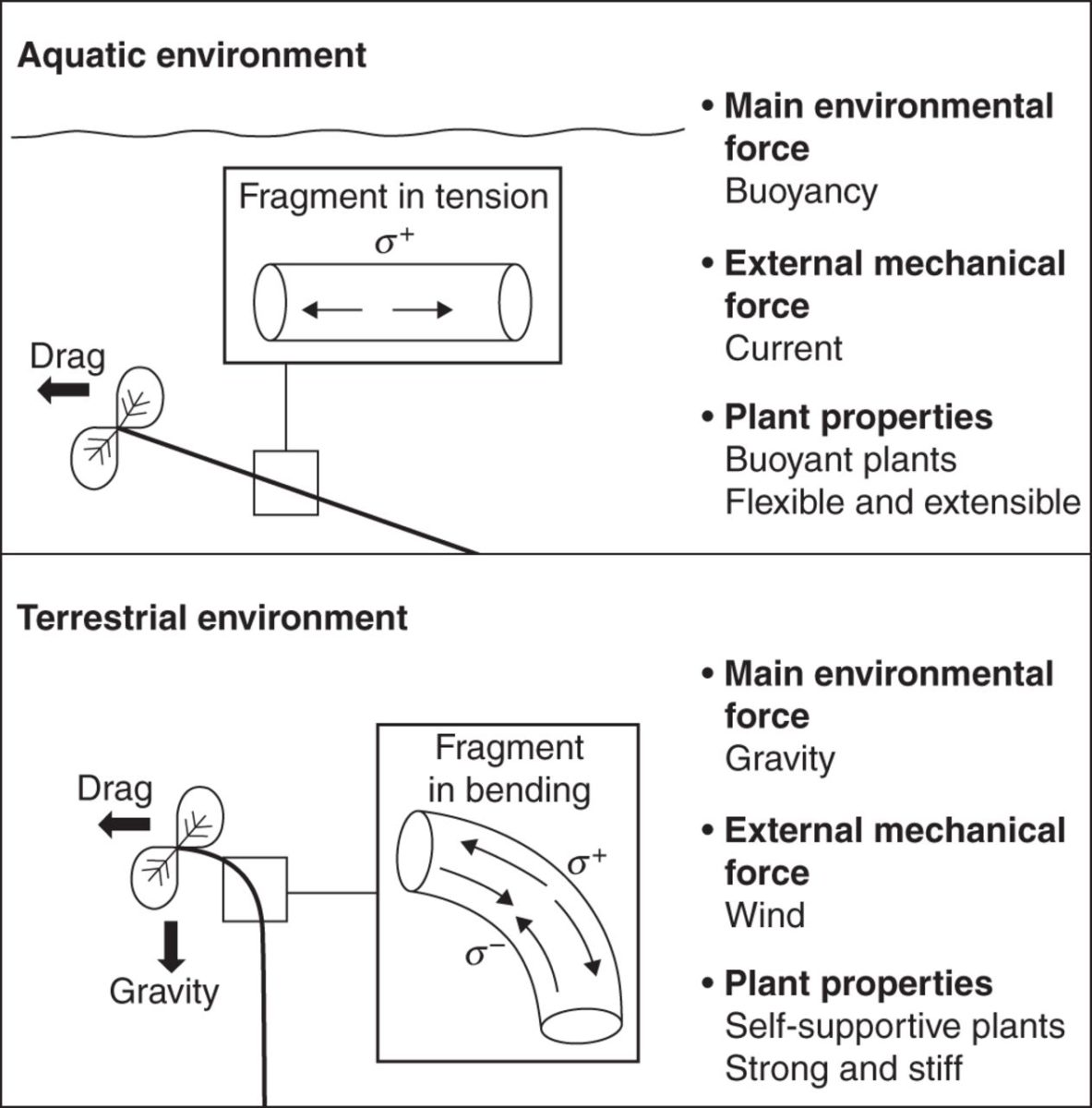 Force Current Flow: Do Changes In Water Levels In Wetlands Give Plants A