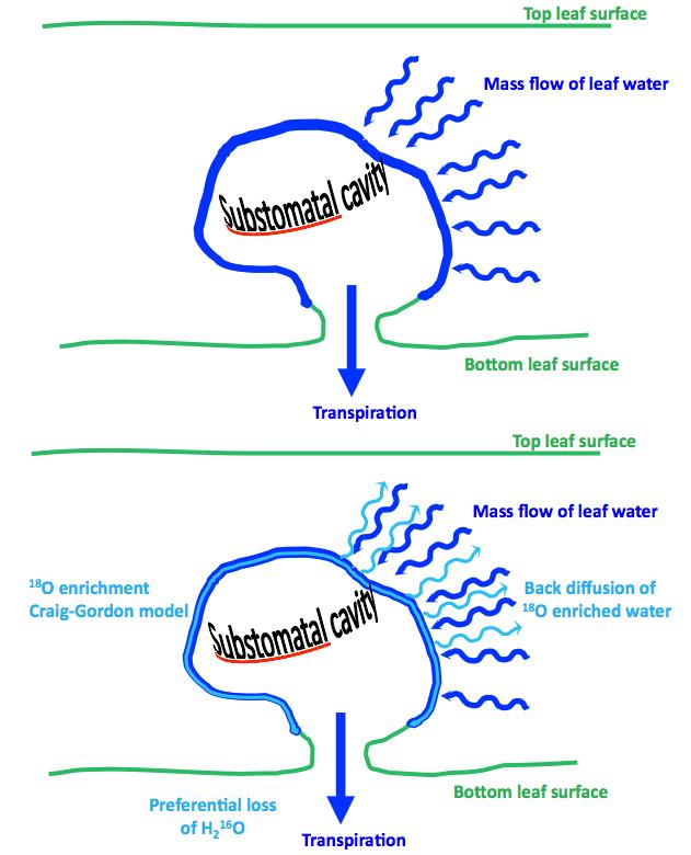 The Péclet effect