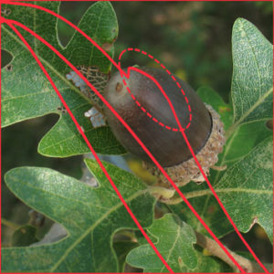 Stress tolerance of recalcitrant embryonic axes of Quercus