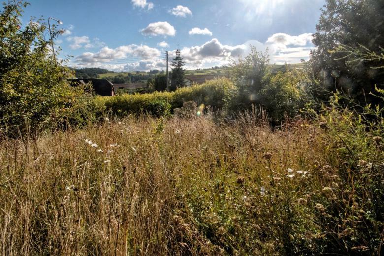 meadow-med