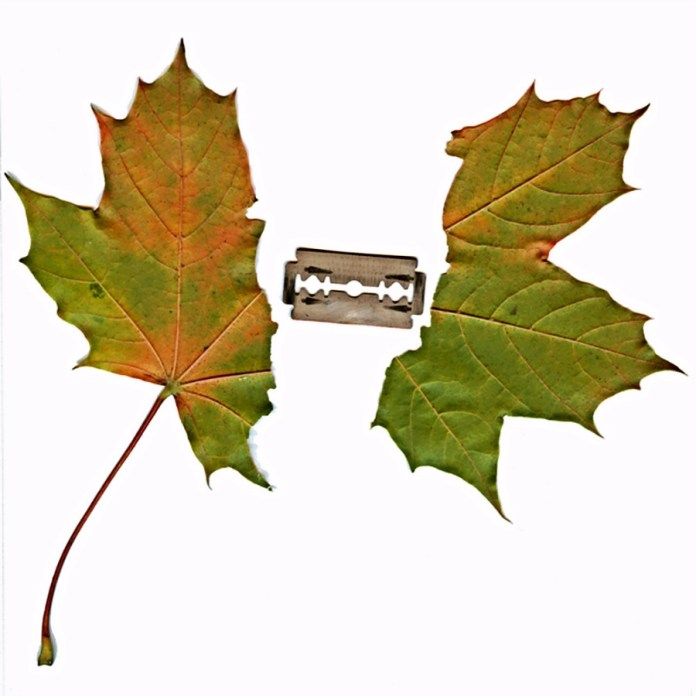 Ripped leaf