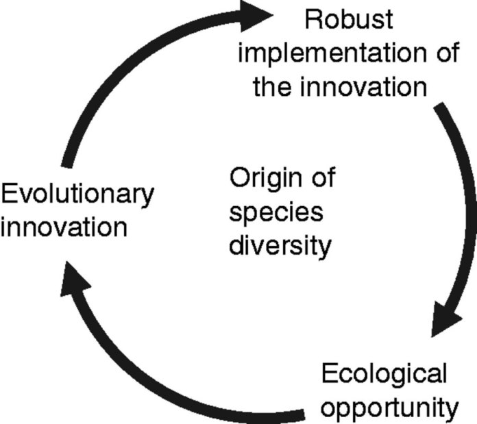 Proposed scenario as to how the interplay between evolutionary innovations, developmental robustness and ecological opportunities contributes to the origin of species diversity