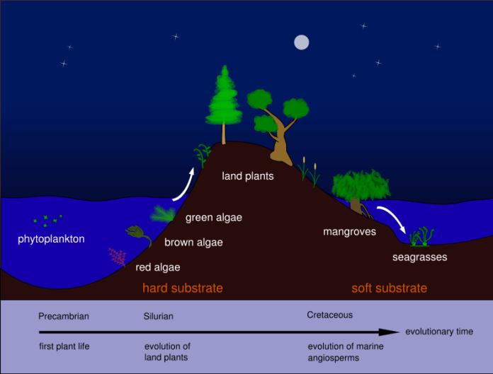 Evolution of seagrasses