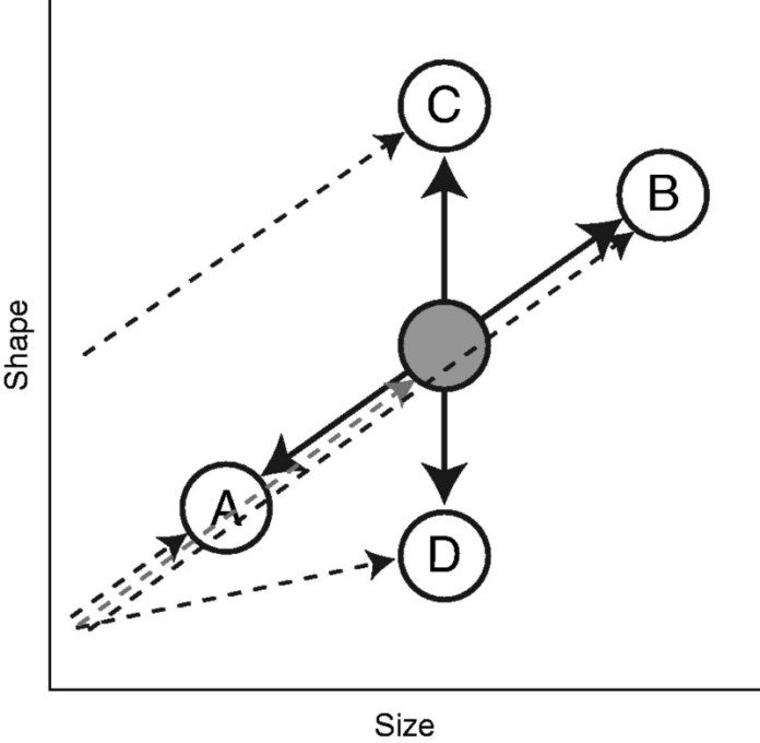 Schematic representation of the evolution of a morphological structure following or not following the ontogenetic scaling expectation.