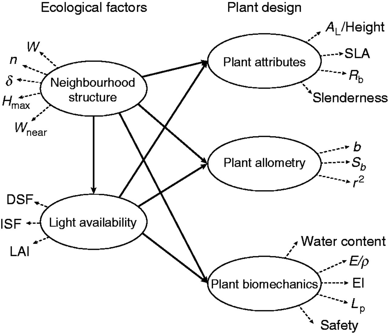 Plant design is affected by neighbourhood structure and