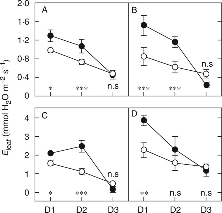 Changes in daily transpiration at the leaf scale in C4 species