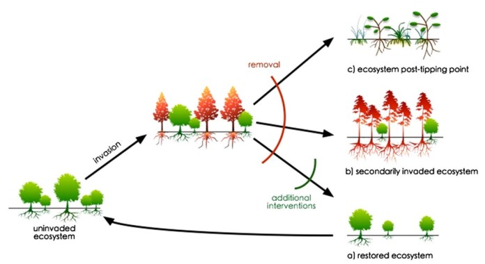 Three possible trajectories of change in forest ecosystems that may occur following removal or loss of an invasive species.