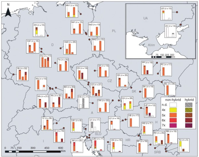 Distribution of cytotypes and hybrids of subsect. Caninae and Rubigineae in the study area.