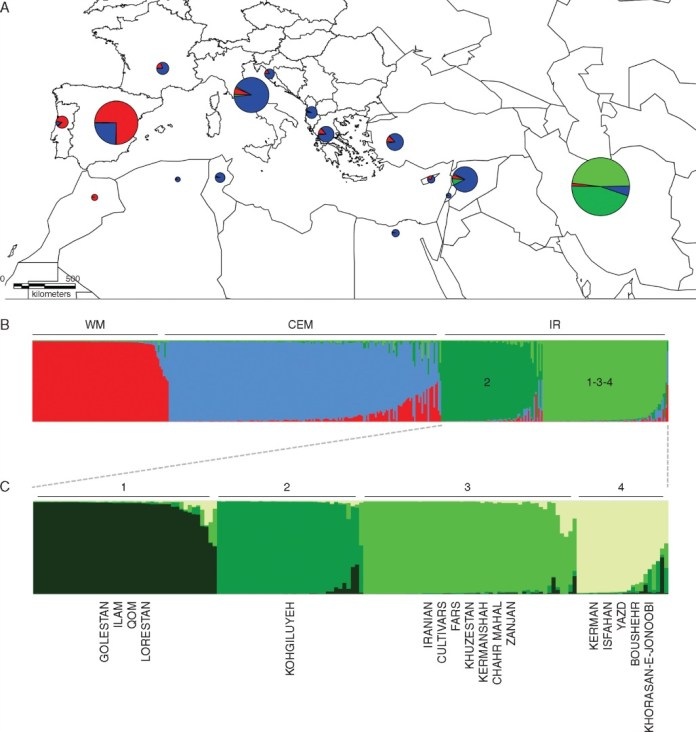 Geographical distribution of different gene pools detected through Mediterranean and Iran using Structure software