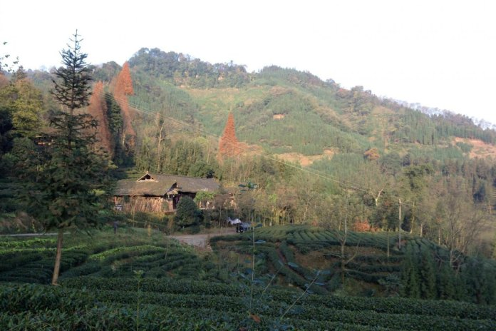 Patches of reforested land alongside farms in Sichuan Province, China.