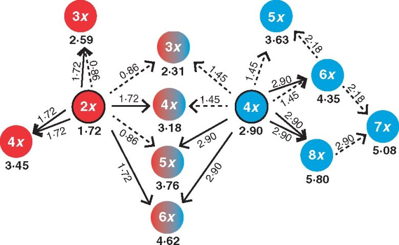 A theoretical overview of crosses involving reduced (dashed arrows) and unreduced (solid arrows) gametes of diploid (red with black stroke) and tetraploid (blue with black stroke) parents and cytotypes of the resulting offspring