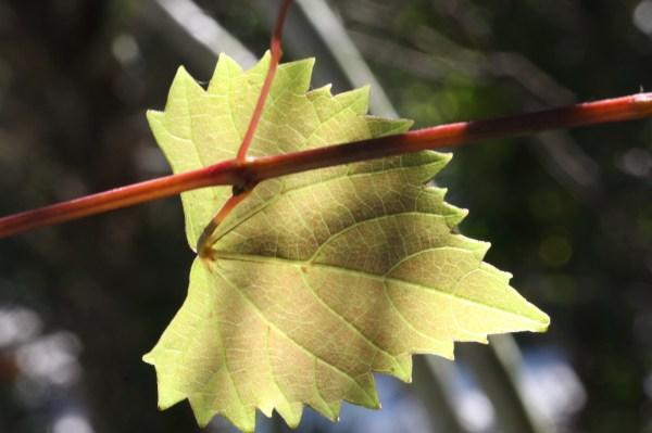 Lesson 8. External Plant Structure Botany Companion