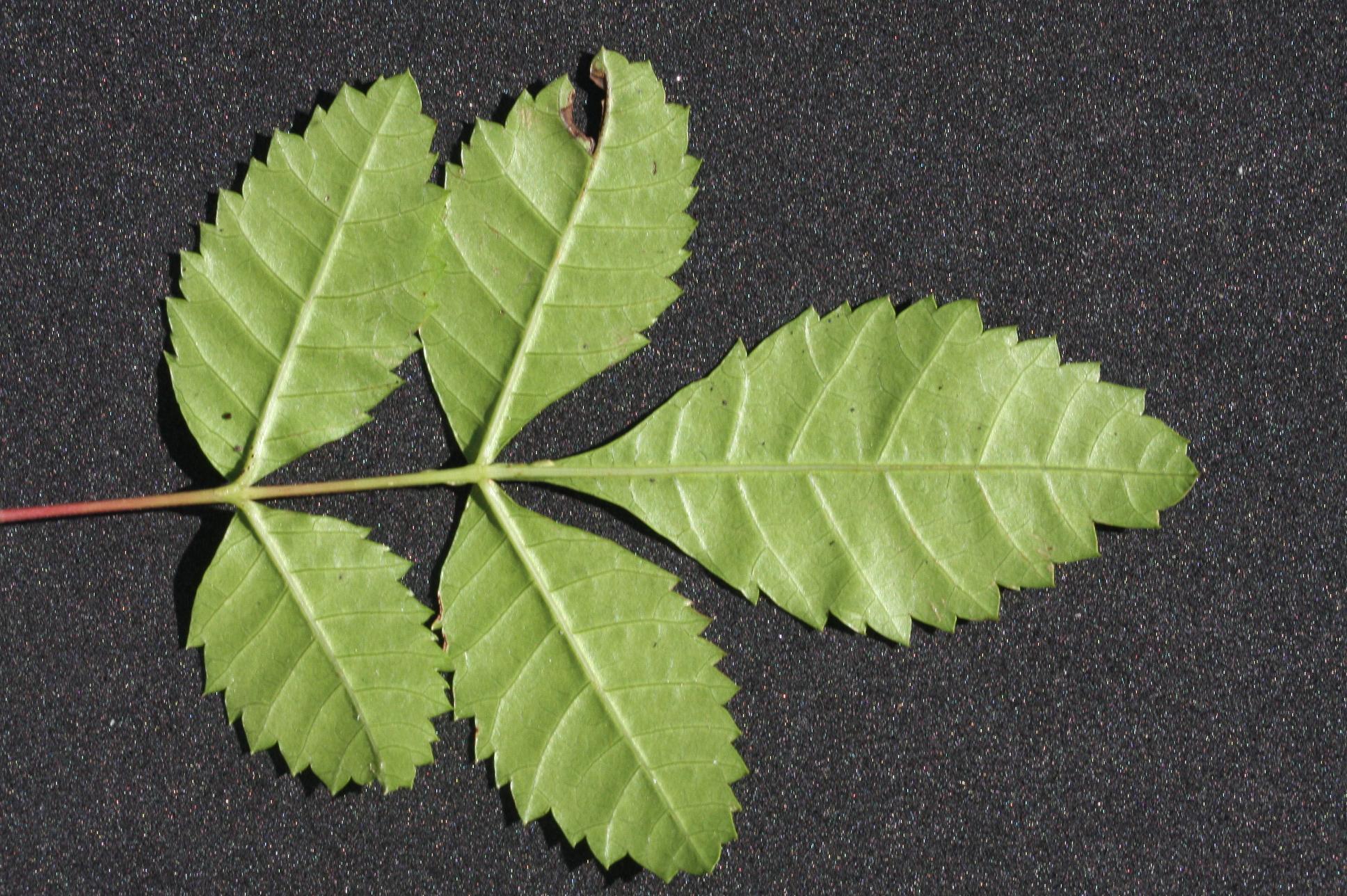 Lesson 8 External Plant Structure Botany Companion