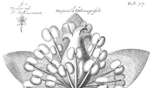 herbals St John's wort, SCLA Rutgers