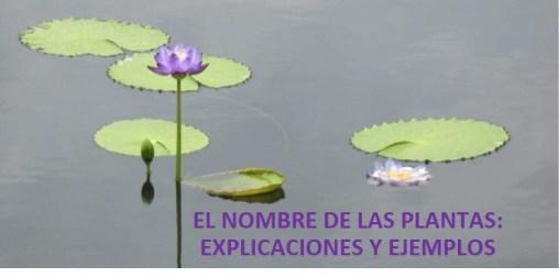 Cover post image for El Nombre de las Plantas