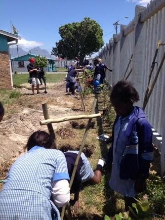 Tree-planting with Greenpop