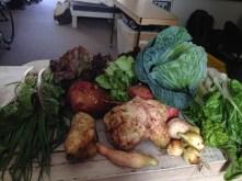Bountiful harvest from Greenpop nursery
