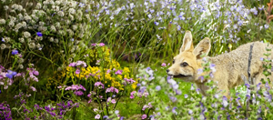 It's Time For The 100th Annual Darling Wildflower Show