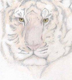 wpid-siberian_tiger_by_mdngtrain.jpg