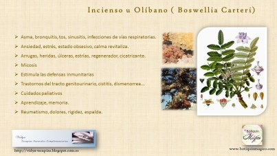 Aceite esencial incienso olibano
