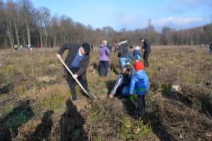 plantare copaci rotary