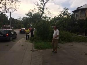 copac cazut pe bulevardul mihai eminescu din botosani