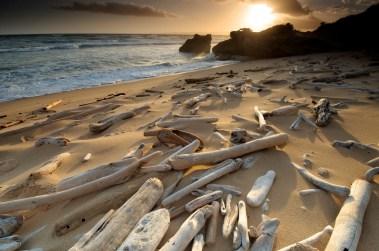 Driftwood-beach