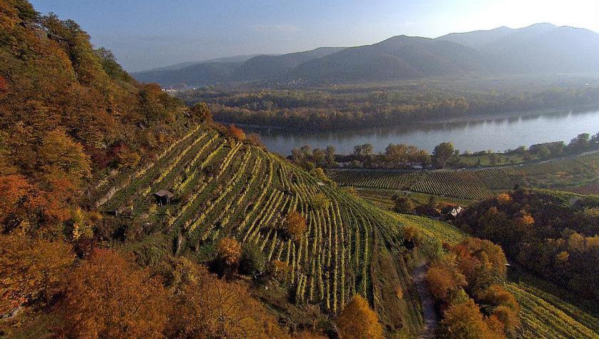 Vinea Wachau hat den Weinbau in der Wachau revolutioniert