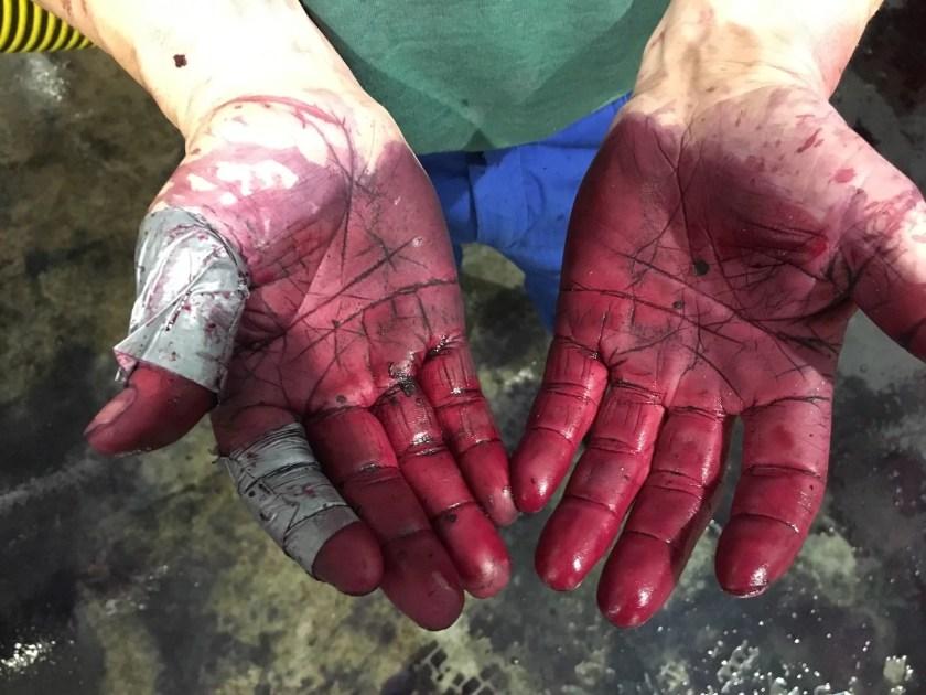 Vom Rotwein rot gefärbte Winzer-Hände