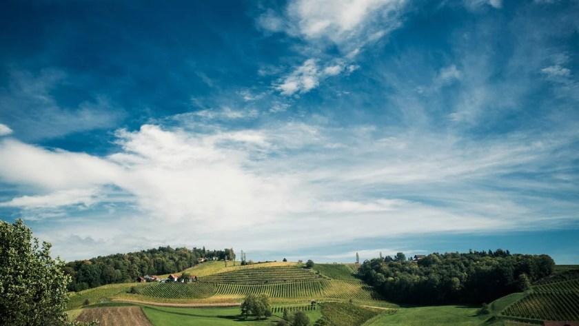 Ausblick auf die Weingärten vom Weingut Gross in der Südsteiermark.