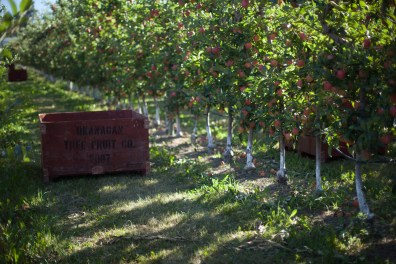 Summerland Orchard