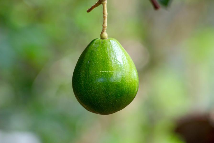 avocat fruit légume alcalin