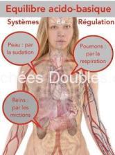 Cliquez ici pour découvrir l'image de nos 3 principaux organes d'élimination des acides